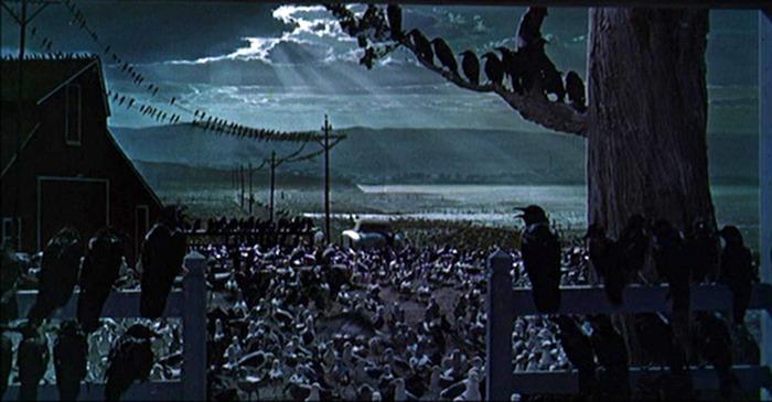 Los pájaros. (Universal Pictures. 1963.)